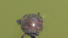 Turtle Orange Patterned Shell Swims Stock Footage