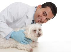 Friendly caring vet with a sick animal - stock photo