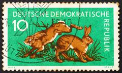 Postage stamp GDR 1959 Hares, Lepus Timidus, Animal - stock photo