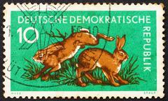 Postage stamp GDR 1959 Hares, Lepus Timidus, Animal Stock Photos