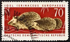 Postage stamp GDR 1963 Hares, Hedgehogs, Erinaceus Europaeus, An Stock Photos