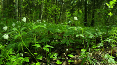 Spring in the forest. St. Petersburg. Russia Stock Footage
