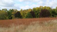 Prairie Grass with a few Red Trees in the background Stock Footage