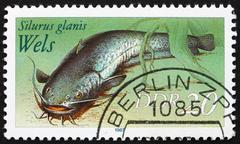 Postage stamp GDR 1987 Wels Catfish, Sheatfish, Silurus Glanis - stock photo