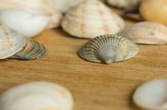 some sea cockleshells of different shades on a wooden surface - stock photo