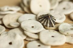 the cockleshells scattered on a wooden surface - stock photo