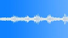 Cricket sound Sound Effect