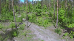 Wood panorama, fly up  view. Aerial Stock Footage