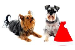 Two cute lovable pets - stock photo