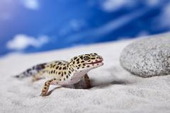 Leopard Gecko - stock photo
