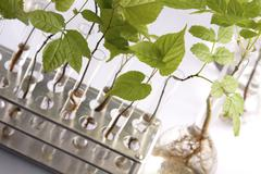 Plants in laboratory. Genetic science Stock Photos