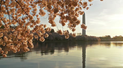 Cherry Blossoms and the Washington Monument Stock Footage