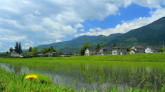 Paddy field in Nagano Prefecture, Japan. Stock Footage