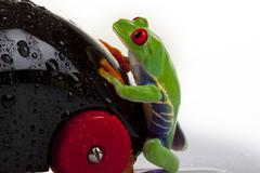 Green Frog in concepts Stock Photos