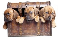 Young Cute dogs! - stock photo