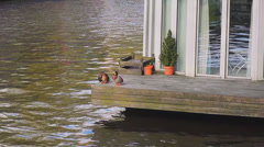 Wide shot of two ducks on verandah at waterfront Stock Footage
