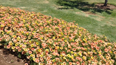 Flowers in the wonderful garden Stock Footage