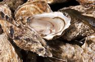 Stock Photo of Oyster mollusk
