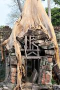Banyan roots in angkor stones Stock Photos