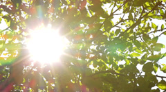 Sunlight Solar Power through leaves and branches of a tree 4 Stock Footage