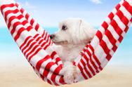 Stock Photo of Pet dog summer holiday