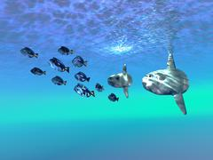 Sunfish Stock Illustration