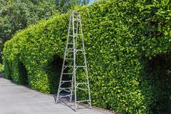 Aluminum ladder with wall green Stock Photos