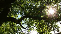 Stock Video Footage of Sunlight Solar Power through leaves and branches of a tree 6 pan