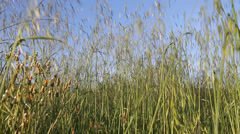 Herbs moving Stock Footage