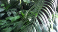 Tropical jungle views in motion with Cala flowers Footage