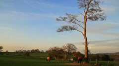 Horses in sunset Stock Footage