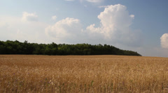 Crop Field in a hot Summer Day Stock Footage