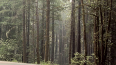 Forest along the 101 Highway in Oregon Stock Footage