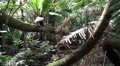 Tropical jungle views HD Footage
