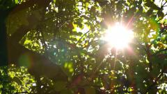 Sunlight Solar Power through leaves and branches of a tree 7 pan Stock Footage