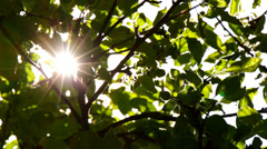 Sunlight Solar Power through leaves and branches of a tree 9 Stock Footage