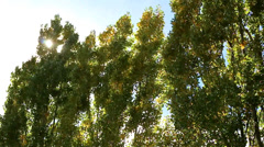 Wind in the trees_5384 Stock Footage