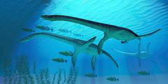 Plesiosaurus migration Stock Illustration