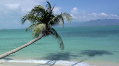 A lonely Palm Tree at Thong Son Bay Koh Samui - stock footage