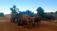 Vietnamese farmers Stock Footage