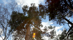 Play of colors in pine. Multicolor specks of sunshine through the pine needles. - stock footage