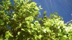 Rainstorm tree water mega storm Stock Footage