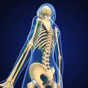 Anatomy of female lymphatic system - stock illustration