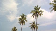 Palm Trees on Ao Loh Da Lam Beach Stock Footage