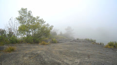Misty Fog and wind blowing tree at high mountain - stock footage