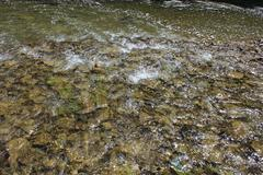 Beautiful stream of speed mountainous river Stock Photos