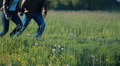 couple of lovers runs in a meadow Footage