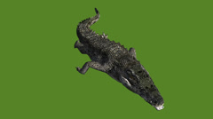 Crocodile swaying body swimming,Dangerous animals. Stock Footage