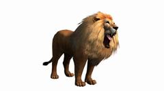 Lion howl trumpet,Endangered wild animal wildlife. Stock Footage