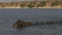 Elephants crossing deep river Stock Footage